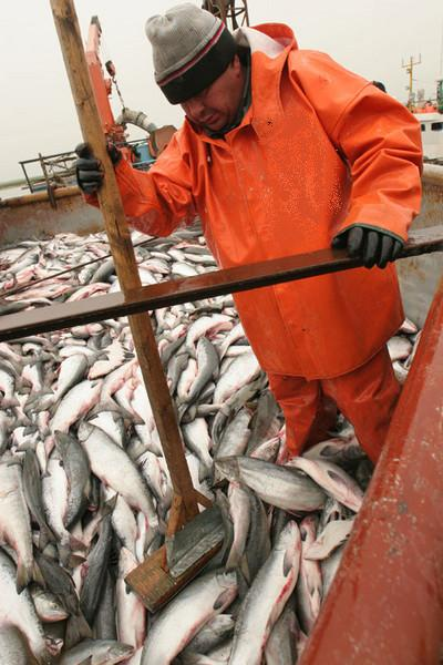 дальний восток работа рыбак